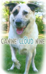 Canine Cloud Nine