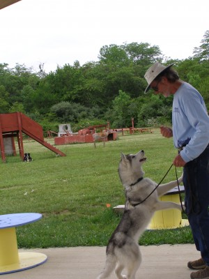 From Head to Heart:  Obedience Skills the NDT Way