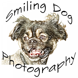 Smiling Dog Photography
